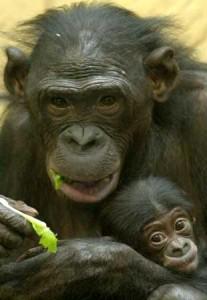 chimpace bebe