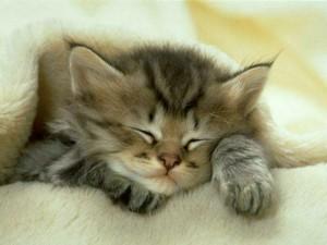 gato dormiendo