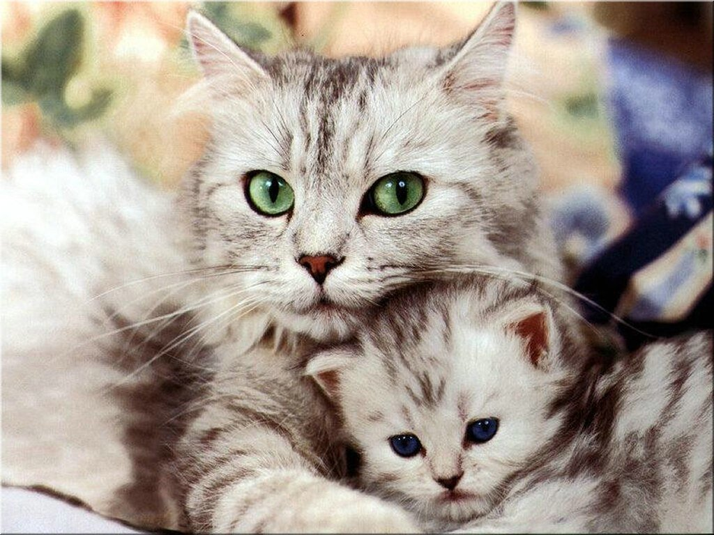 te gustan los gatos? - Taringa!