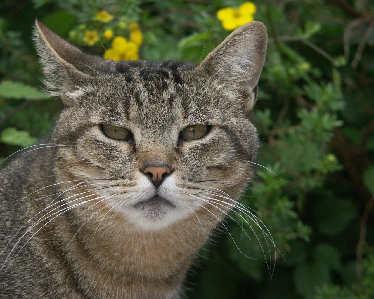 gatos bonitos related keywords - photo #19