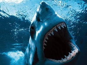 tiburones marinos