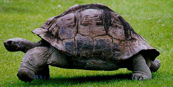 Tortugas prehistóricas