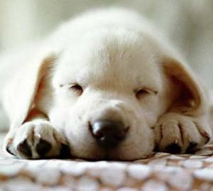 perrito bebe