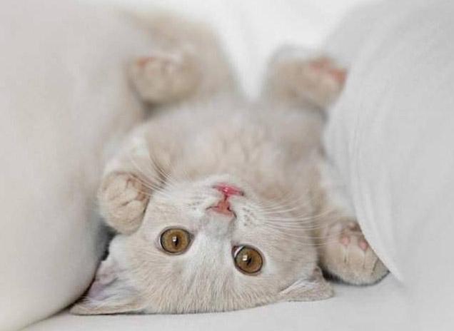 Gato pequeño lindo