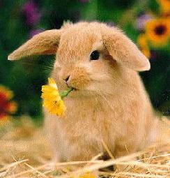Conejo, un mamífero herbívoro