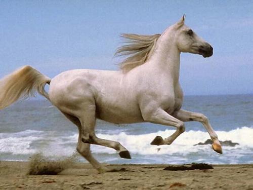 external image caballo-galopando.jpg