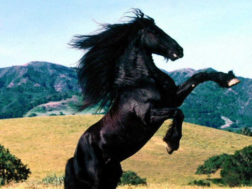 external image caballo-salvaje.jpg