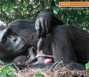 mono parto viviparo