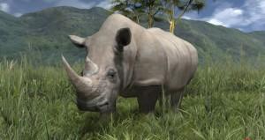 El Rinoceronte, animal casi en peligro de extinción