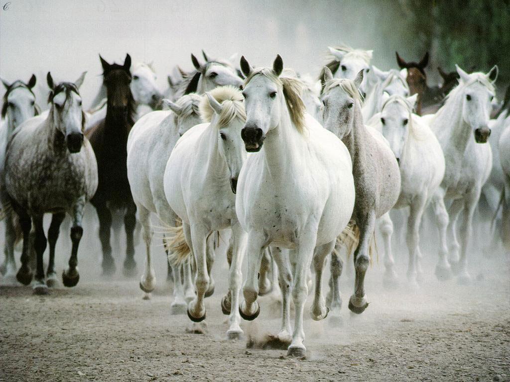 Animales y Animales » caballos
