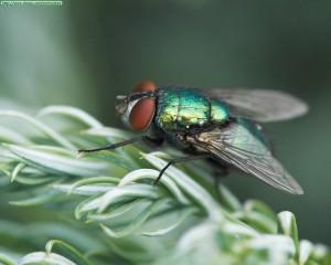 Detalle de una mosca