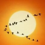 Pájaros volando