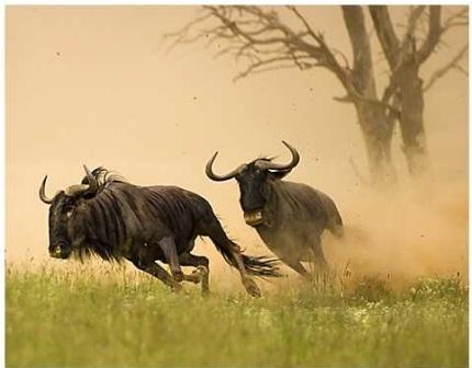 Animales Y Animales Los 10 Animales Mas Veloces En Tierra