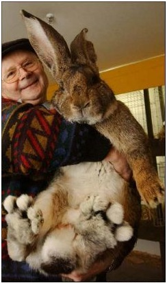 conejo-gigante-1
