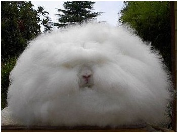 conejo gigante 2