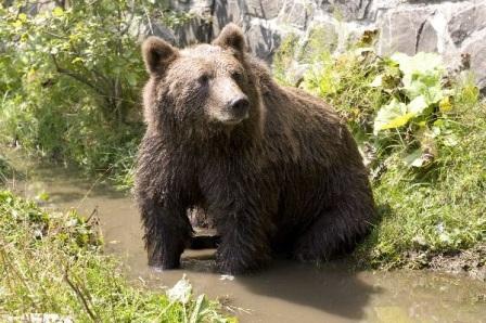 animales osos