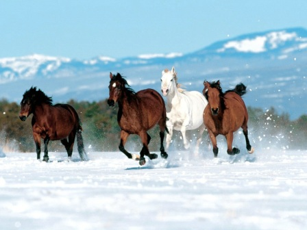 Animals Horses_Born to Run