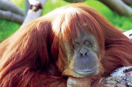 Mejores parques zoológicos del mundo